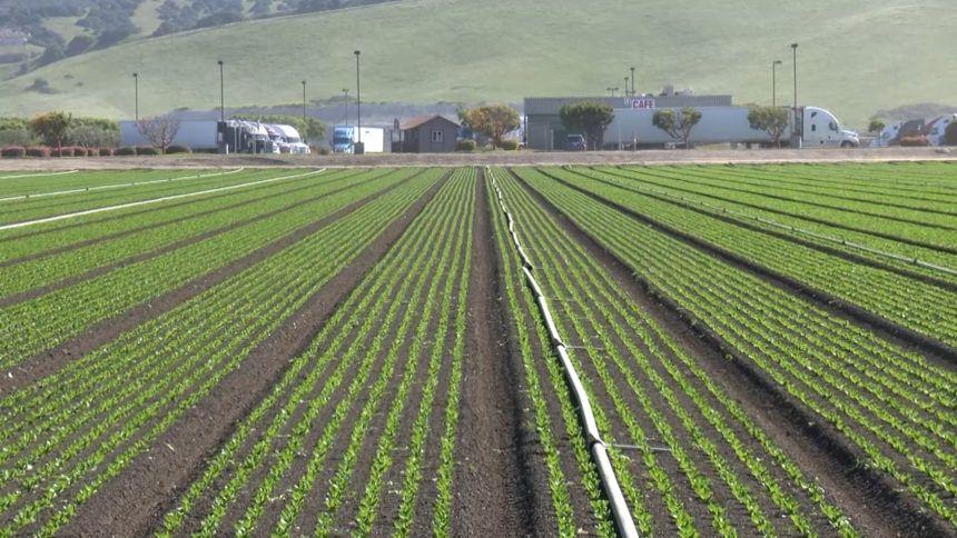 FARMWORKER TESTS POSITIVE - VO.mp4.00_00_02_10.Still001