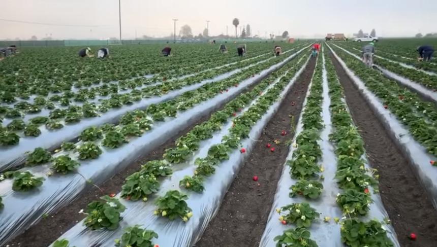 ufw farm workers still 4 17