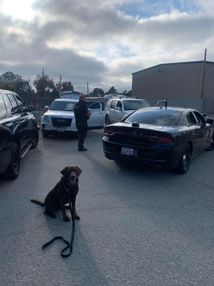 k9 oakley gun arrest
