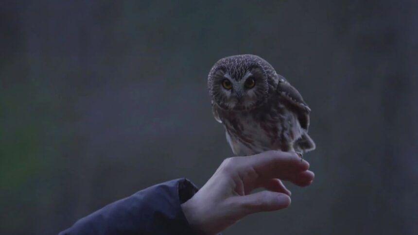 https___cdn.cnn_.com_cnnnext_dam_assets_201125030344-01-rockefeller-owl-released