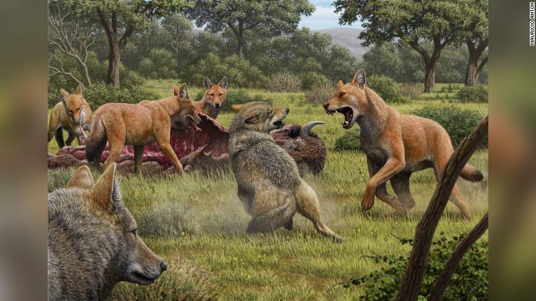 210113075712-restricted-dire-wolf-intl-scli-gbr-exlarge-169