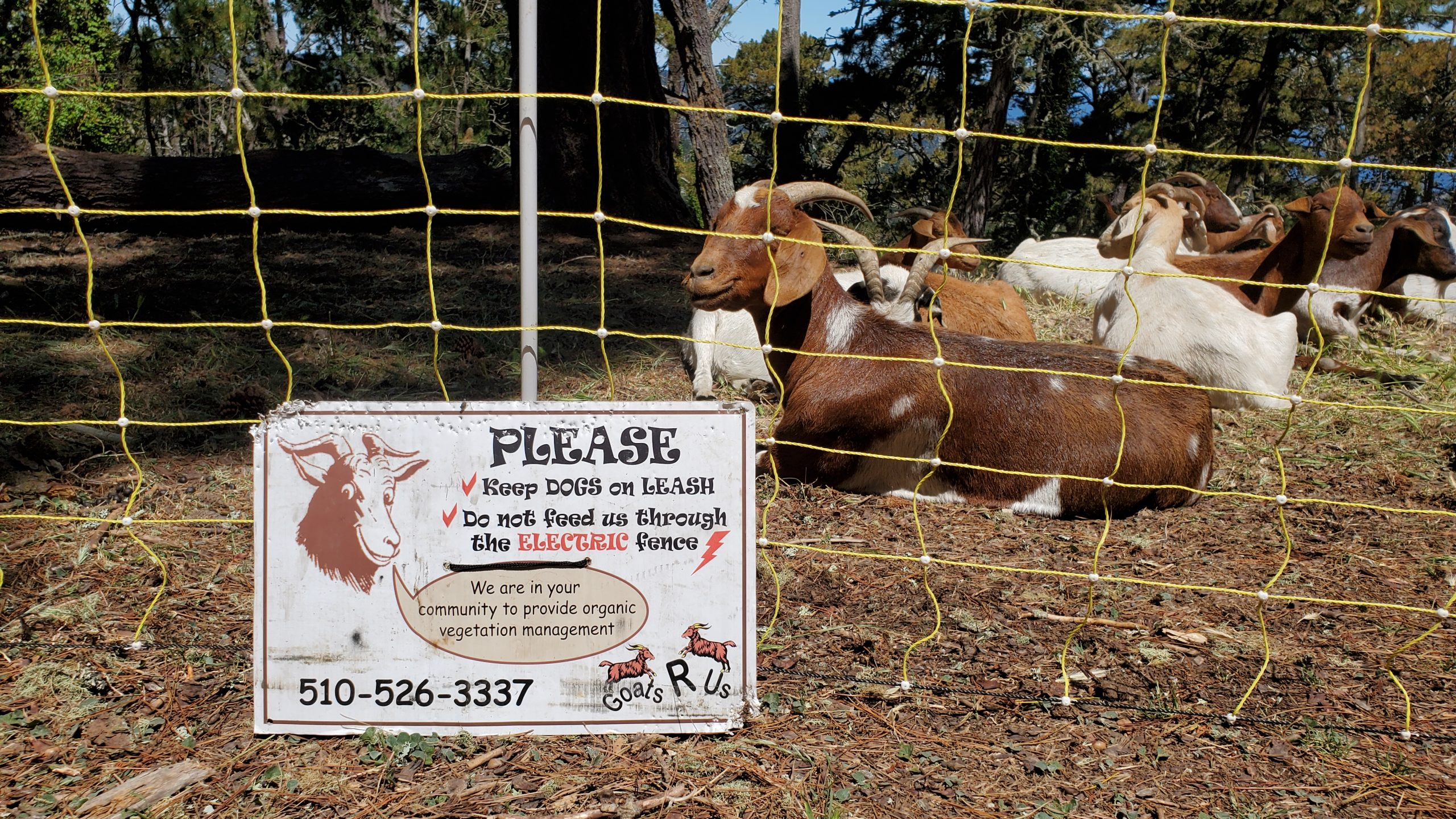 """Goats R Us rents out its goats to provide organic vegetation management. The sign says, """"Please keep dogs on LEASH. Do Not Feed us through the ELECTRIC fence. We re in you community to provide organic vegetation management."""""""
