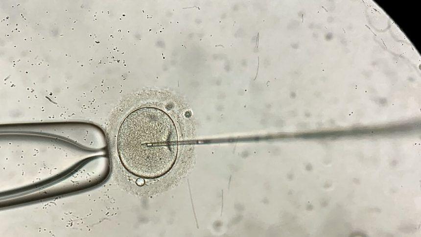 https___cdn.cnn_.com_cnnnext_dam_assets_210611010401-01-california-embryo-destruction-case