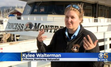 """Naturalist Kylee Walterman's """"once in a lifetime experience"""" involved a whale coming close to her boat."""