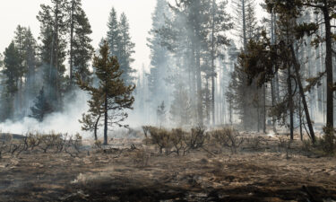 Forest undergrowth smolders on the north front of the Bootleg Fire on July 23 near Silver Creek