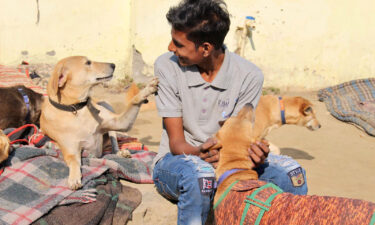 An employee at Kannan Animal Welfare (KAW) interacts with rescued strays at the KAW shelter.