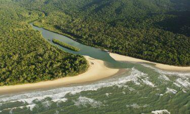 Queensland's Daintree rainforest
